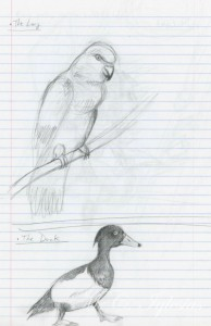 Alice-sketch-lory-duck